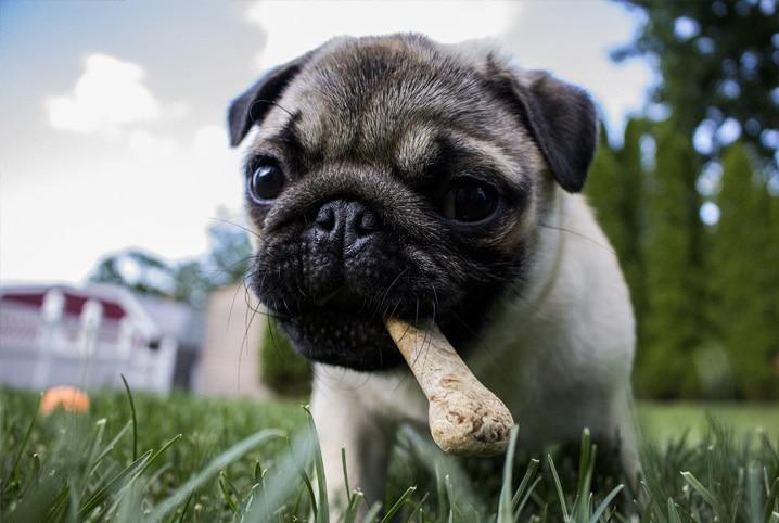 Alimentos que cachorro não pode comer