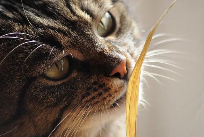 gato olhando para folha