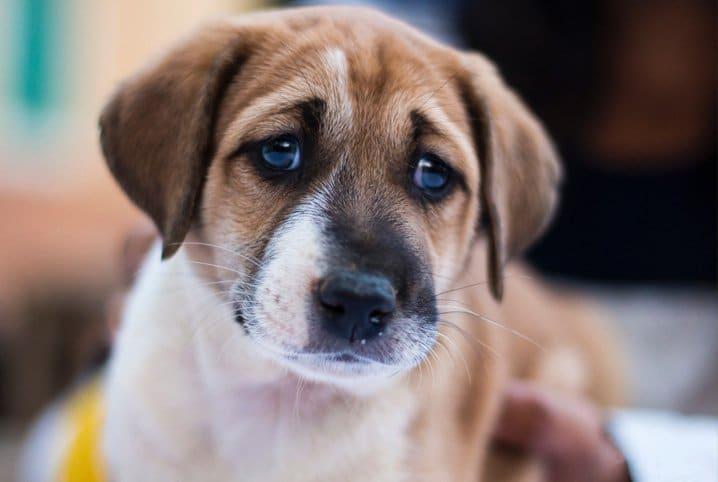 Cachorro com feição triste