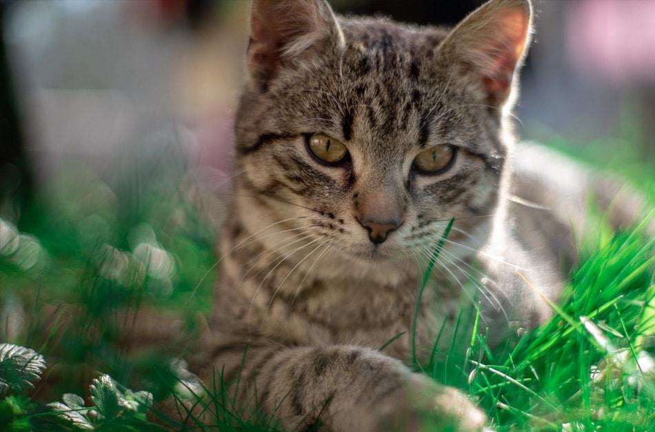 Gato sobre a grama