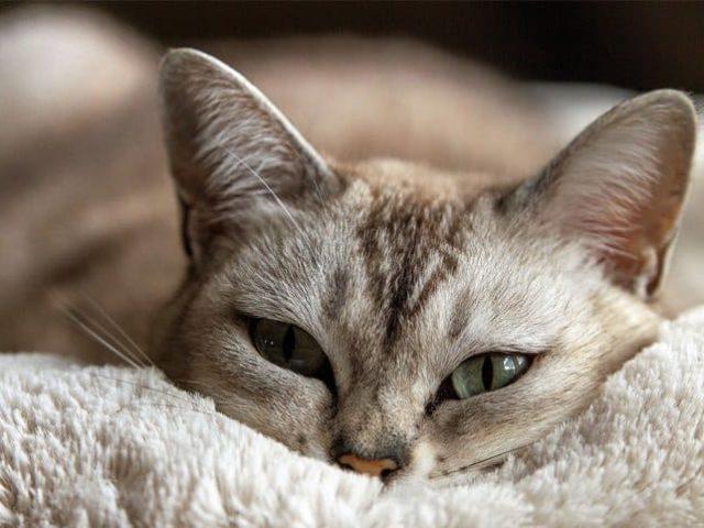 Como saber se meu gato está doente? Descubra