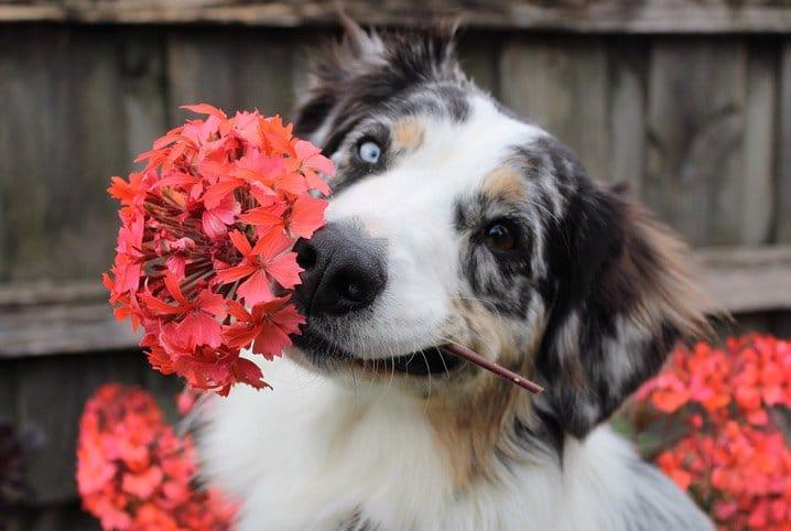 Plantas tóxicas para cães: seu jardim pode ser perigoso