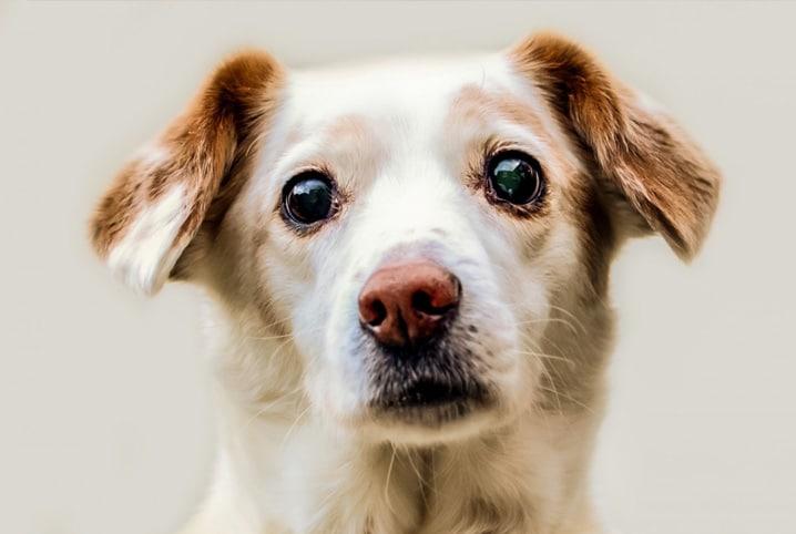 cachorro de olho grande