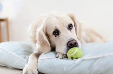 cachorro negando bolinha