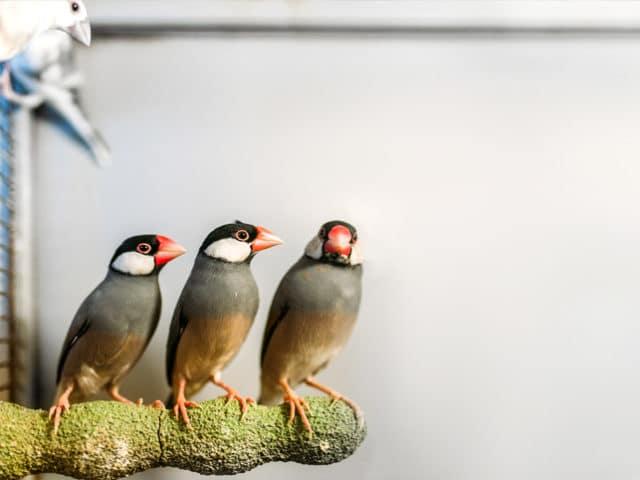Coisas que você precisa saber sobre doenças de aves