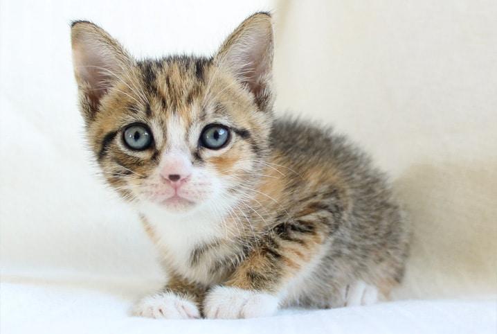 gato filhote peludinho