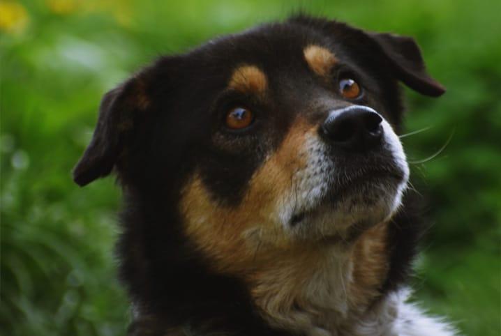 cachorro olhando para cima