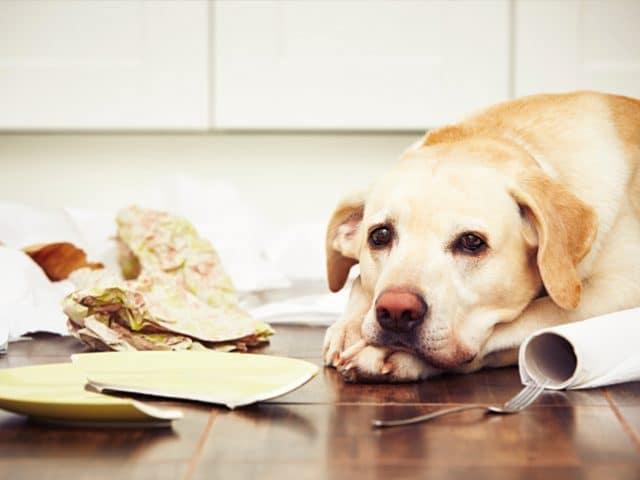 O que é berne em cachorro? Veja como tratar