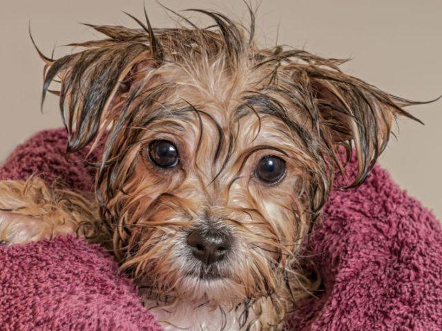 Pode dar banho em cachorro filhote? Tire suas dúvidas