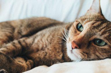 gato com prisão de ventre