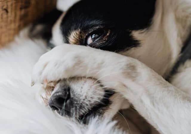 O cachorro engoliu meia? Veja o que fazer para ajudar