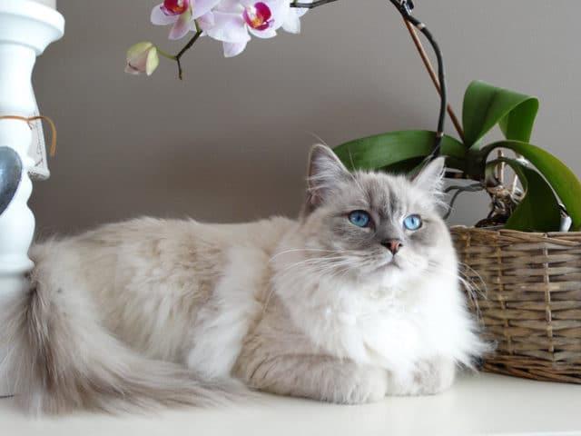 Quais são as plantas venenosas para gatos?