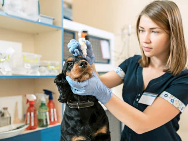 Olho seco em cães: o que pode ser e como tratar?