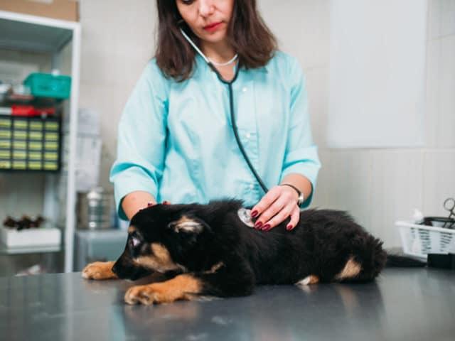 Oncologia veterinária: o que é e para que serve?