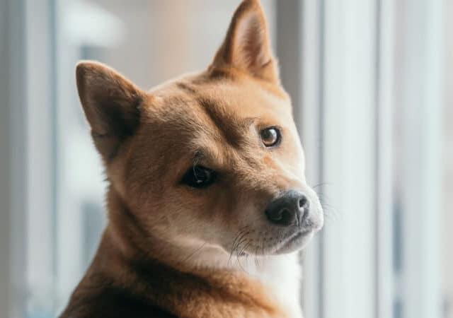 O que deixa o cachorro estressado e como ajudá-lo?