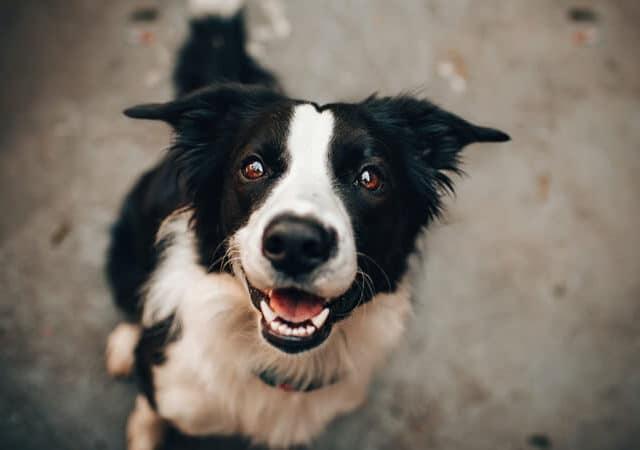 Como aumentar a imunidade do cachorro? Veja dicas