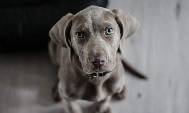 como-aumentar-a-imunidade-do-cachorro