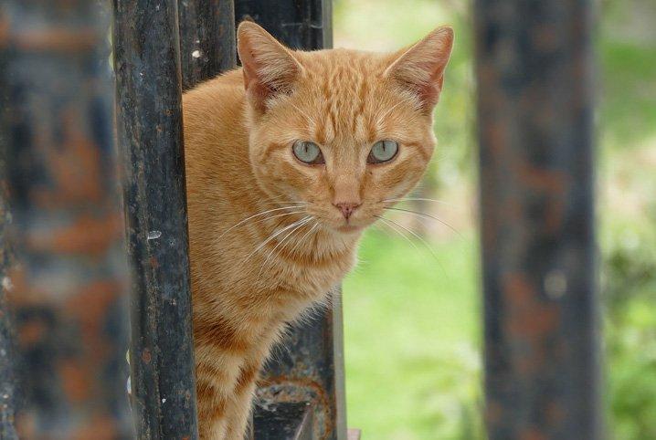 gato-com-medo