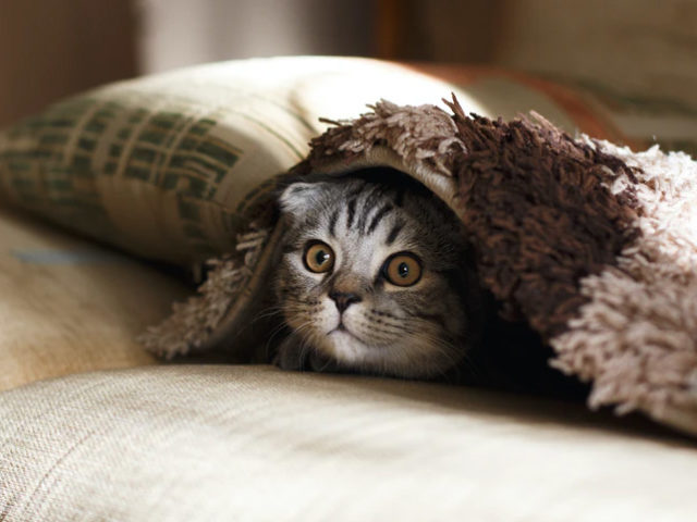 O que deixa o gato com medo e como ajudá-lo?
