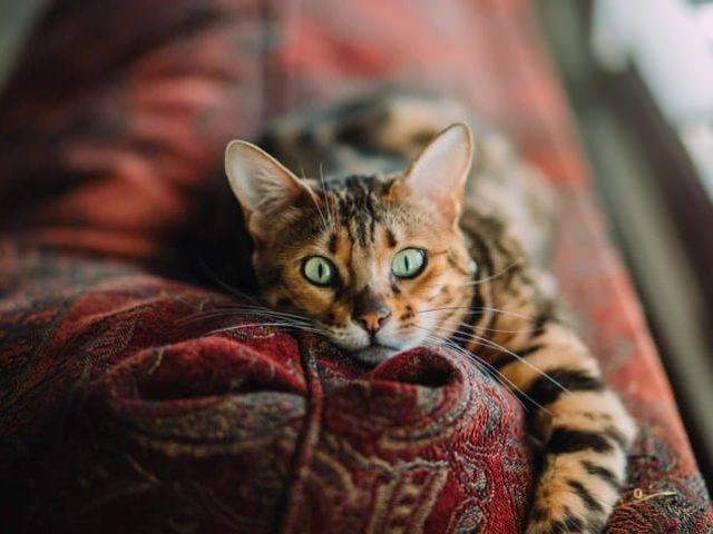 Encontrei meu gato com tosse, o que ele tem?