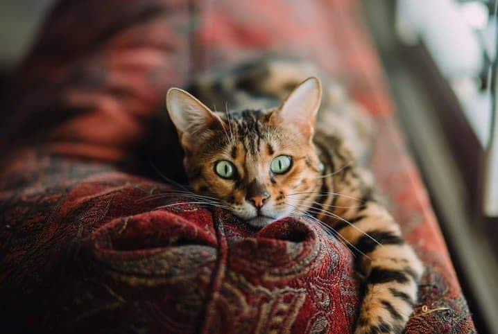 gato com tosse